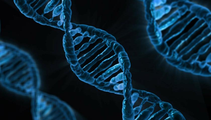 PALB2 ist ein neues, gefährliches Brustkrebs-Gen