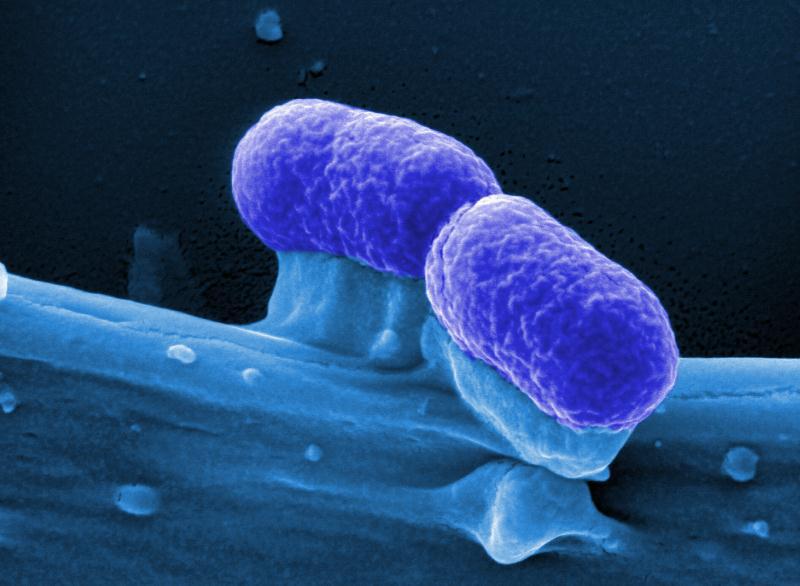 Probiotische Bakterien könnten gegen Krebs wirken