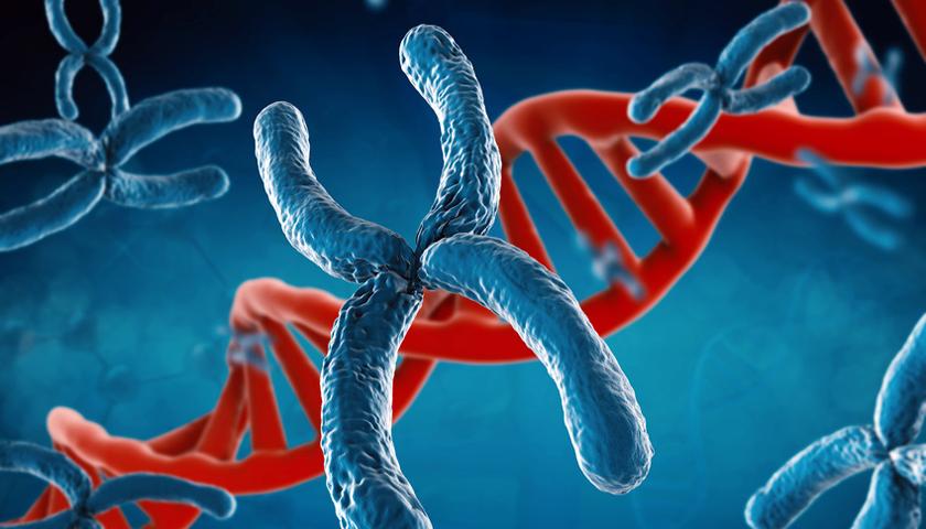 BRCA1: Gibt es bald eine vorbeugende Therapie bei erblichem Brustkrebs?