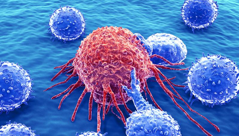 Immuntherapie gegen Krebs