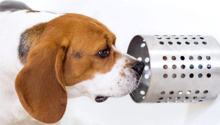 Hunde als Spürnasen für Krebserkrankungen (c) BioScentDx
